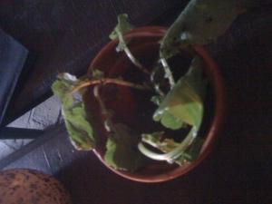 Radish, soil and herbs